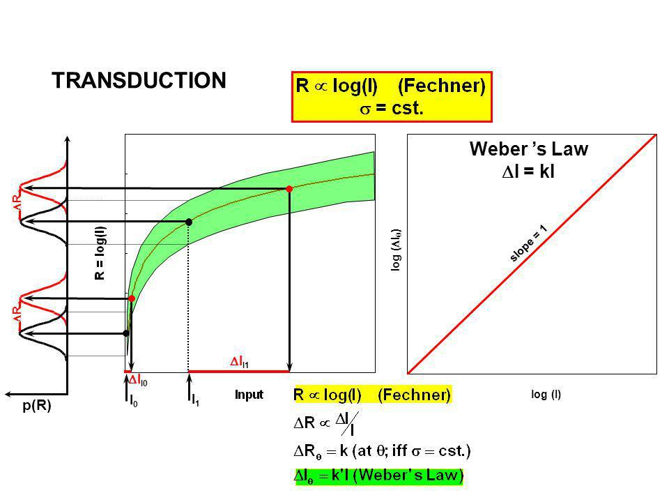 TRANSDUCTION s = cst. Weber 's Law DI = kI p(R) DII1 DII0 I0 I1 DR