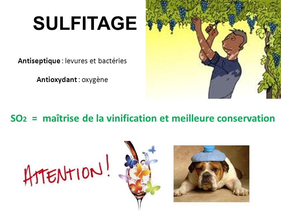 Antiseptique : levures et bactéries
