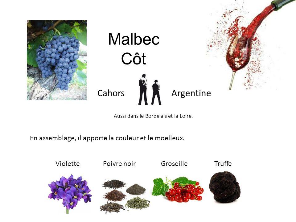 Malbec Côt Cahors Argentine