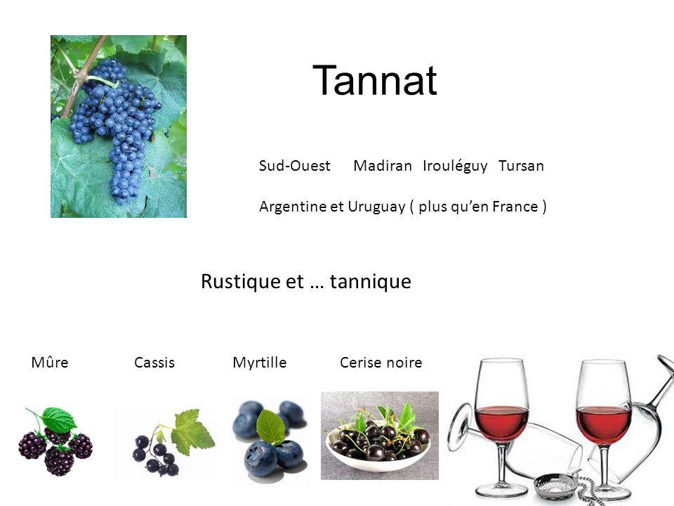 Tannat Rustique et … tannique Sud-Ouest Madiran Irouléguy Tursan