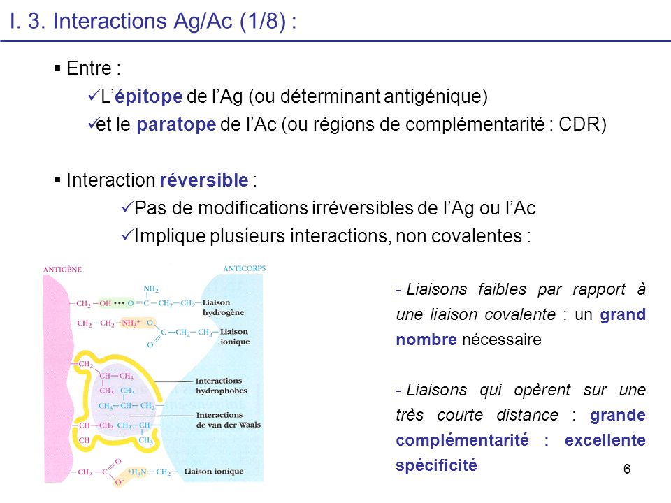 I. 3. Interactions Ag/Ac (1/8) :
