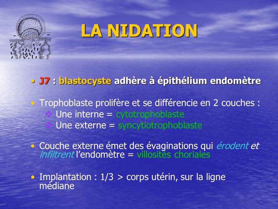 LA NIDATION J7 : blastocyste adhère à épithélium endomètre