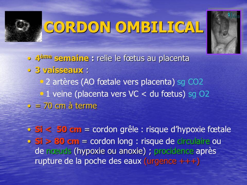 CORDON OMBILICAL 4ème semaine : relie le fœtus au placenta