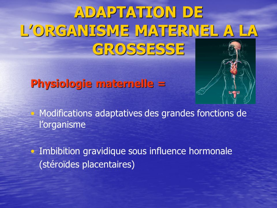 ADAPTATION DE L'ORGANISME MATERNEL A LA GROSSESSE