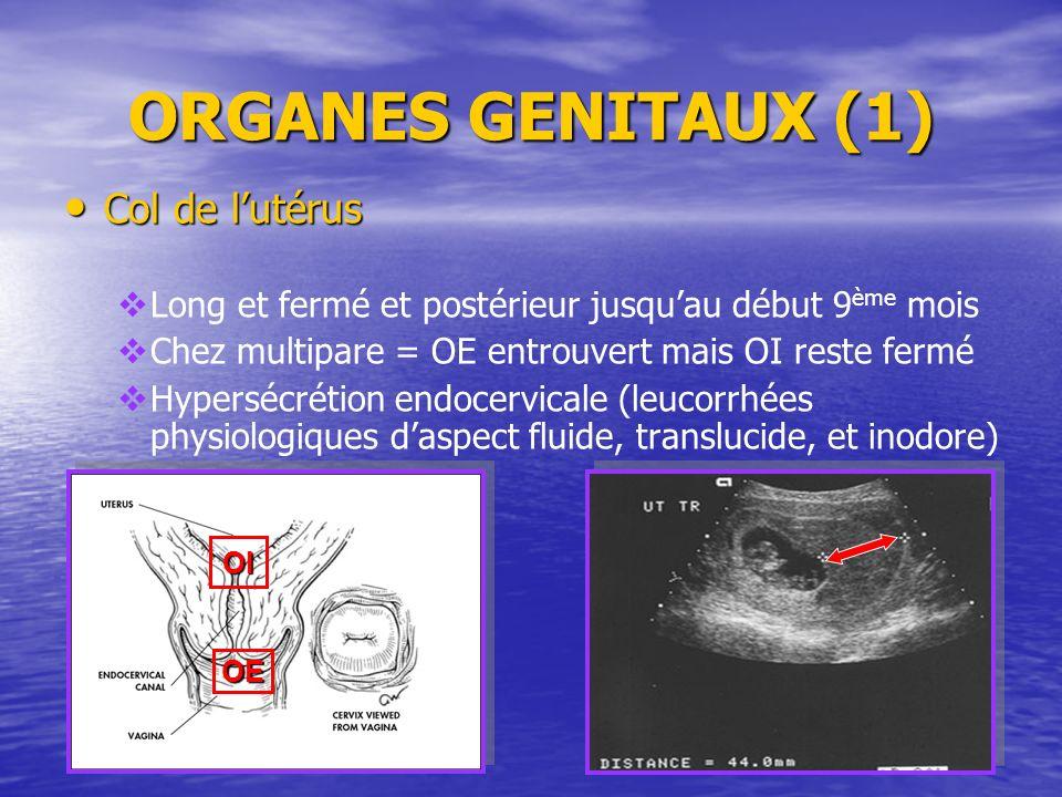 ORGANES GENITAUX (1) Col de l'utérus