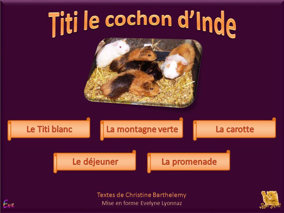 Titi le cochon d'Inde choix Le Titi blanc La montagne verte La carotte