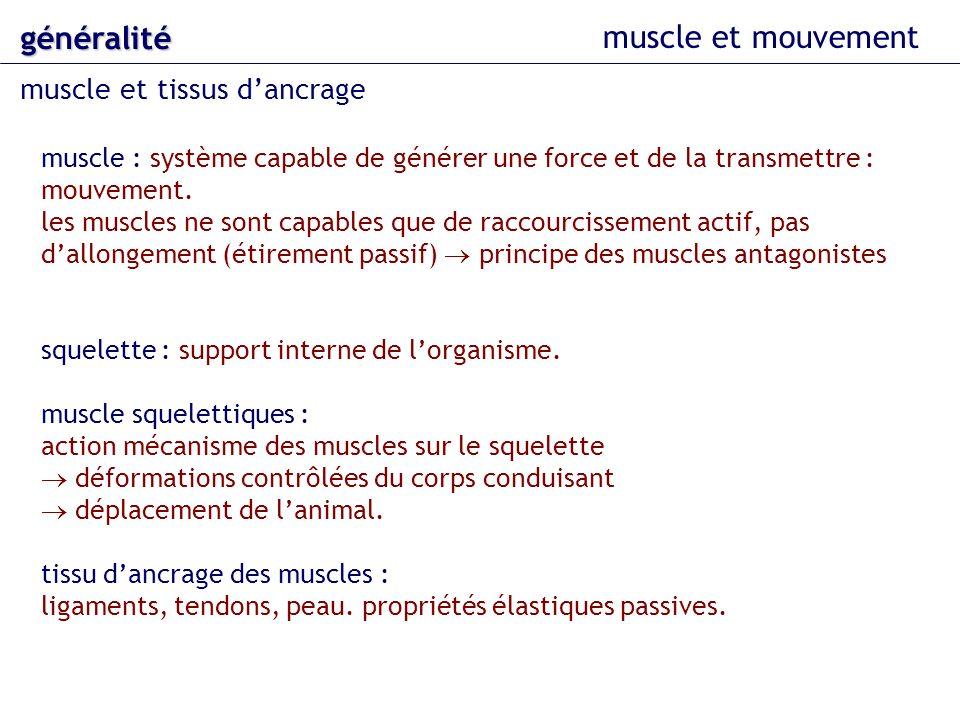 généralité muscle et mouvement muscle et tissus d'ancrage