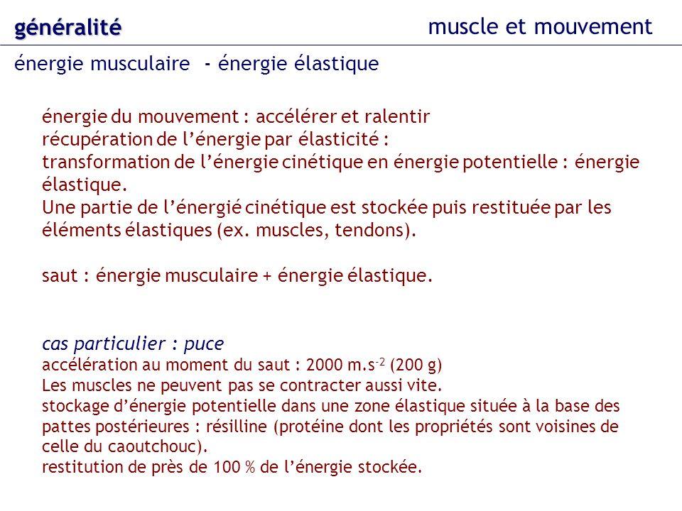 généralité muscle et mouvement énergie musculaire - énergie élastique