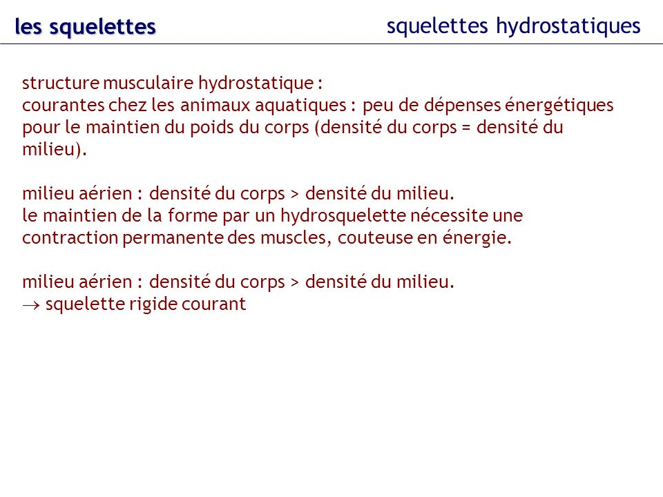 squelettes hydrostatiques