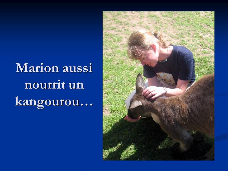 Marion aussi nourrit un kangourou…