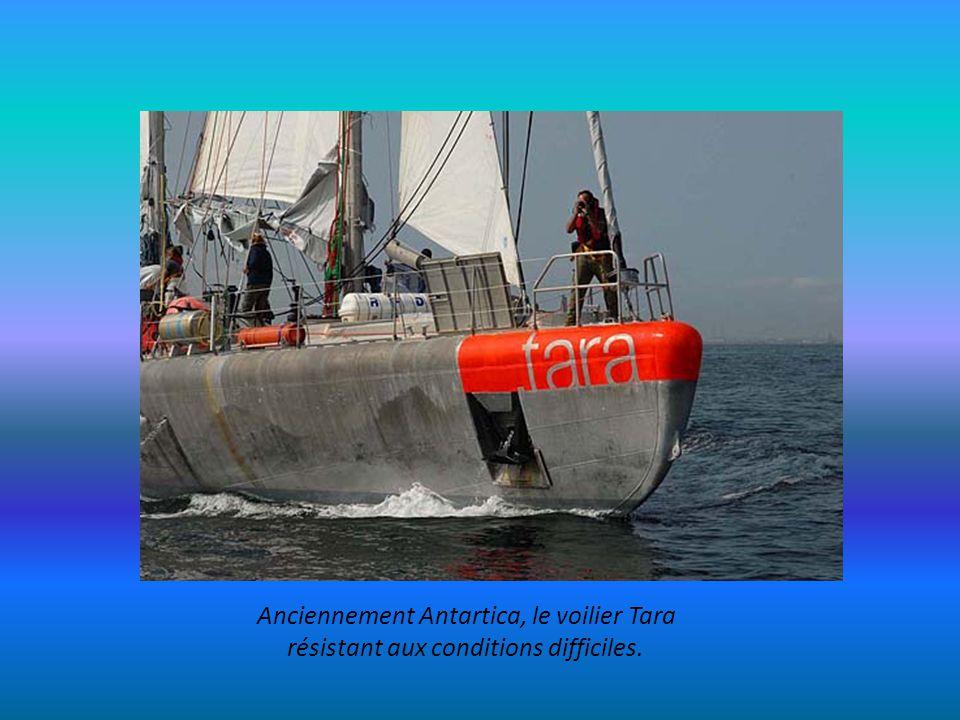 Anciennement Antartica, le voilier Tara