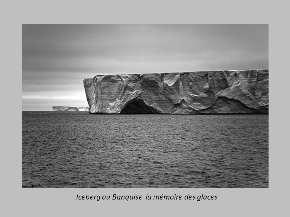Iceberg ou Banquise la mémoire des glaces