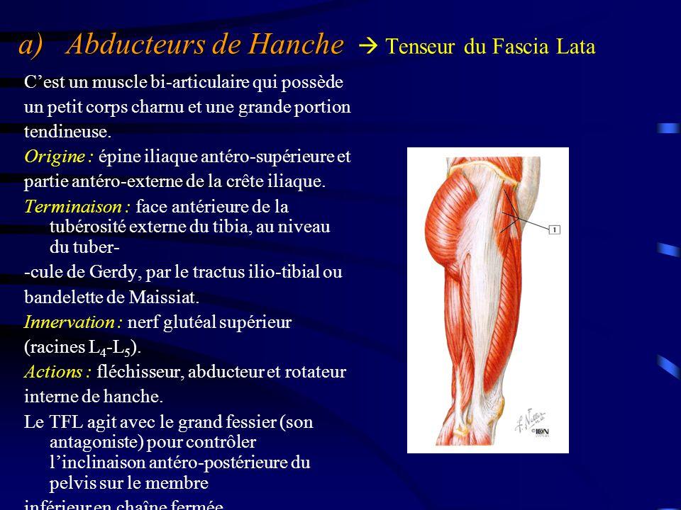 a) Abducteurs de Hanche  Tenseur du Fascia Lata