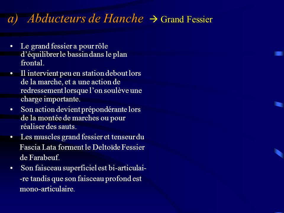 a) Abducteurs de Hanche  Grand Fessier
