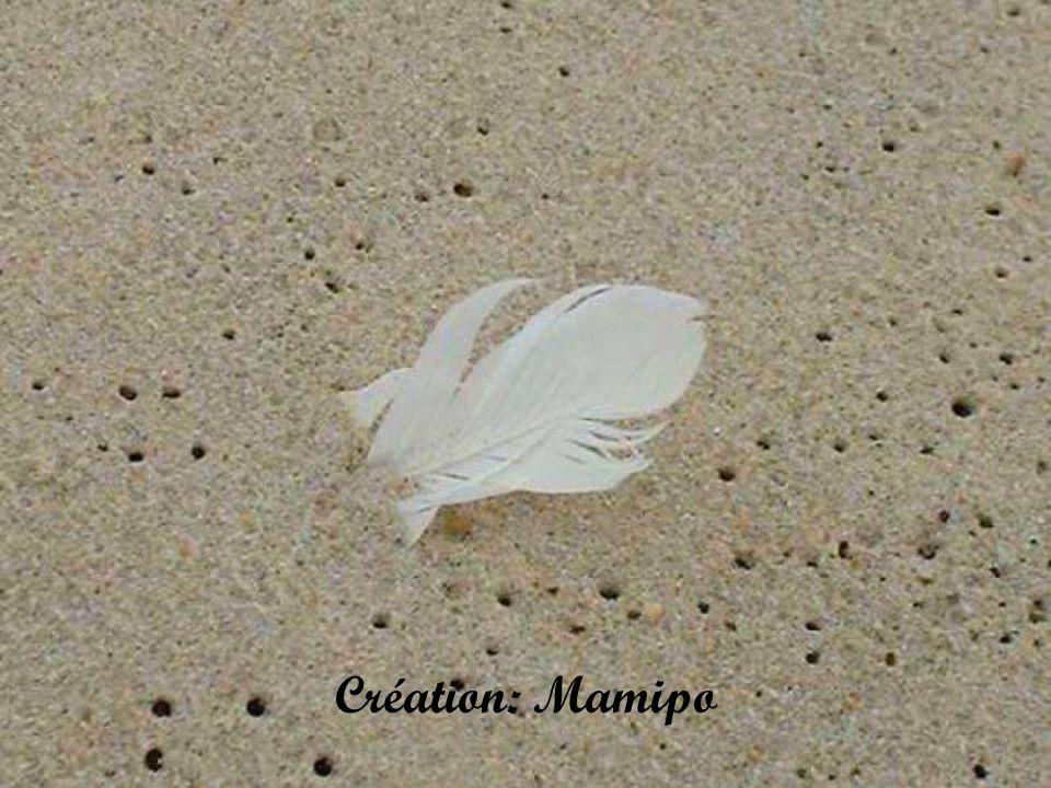Création: Mamipo
