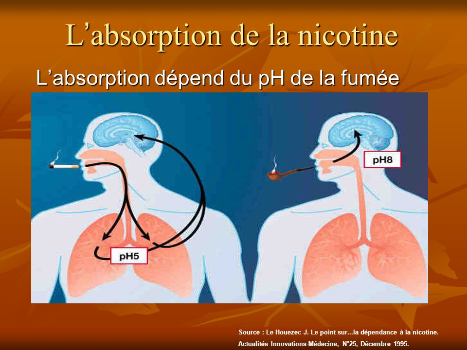 L'absorption de la nicotine