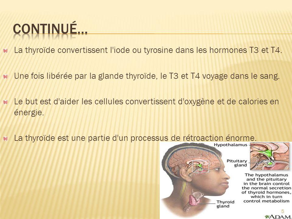 Continué… La thyroïde convertissent l iode ou tyrosine dans les hormones T3 et T4.