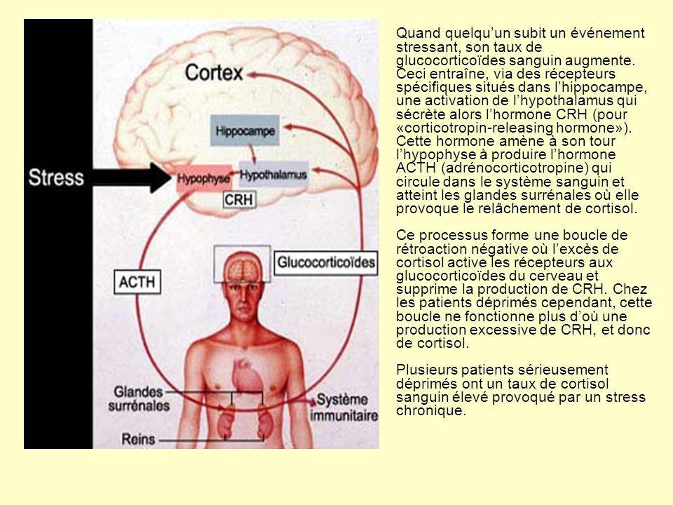 Quand quelqu'un subit un événement stressant, son taux de glucocorticoïdes sanguin augmente.