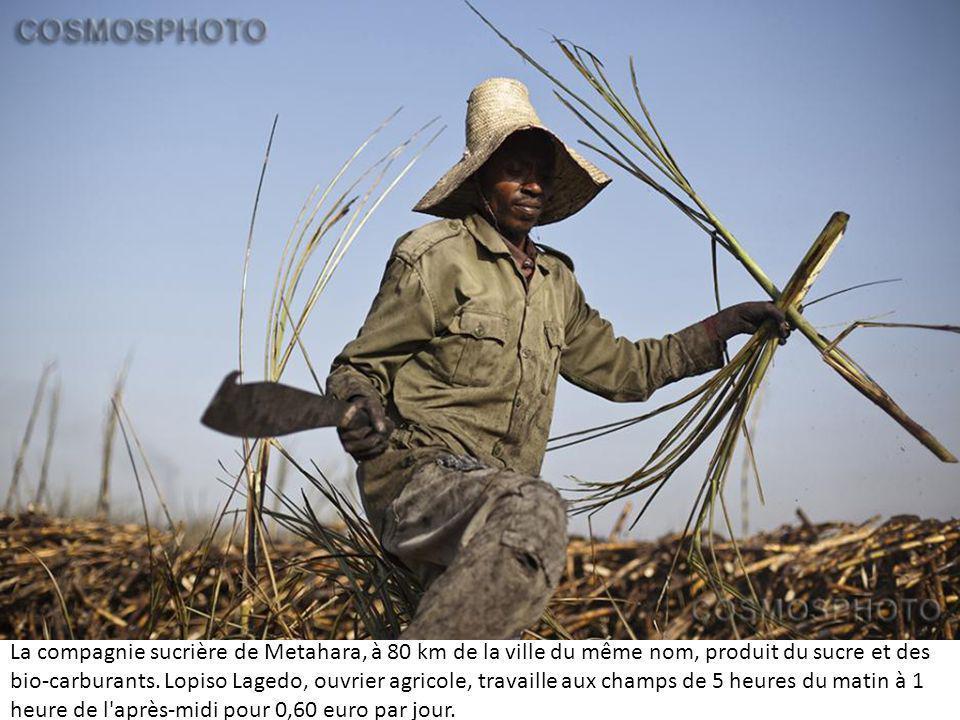 La compagnie sucrière de Metahara, à 80 km de la ville du même nom, produit du sucre et des bio-carburants.
