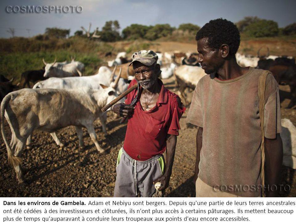 Dans les environs de Gambela. Adam et Nebiyu sont bergers