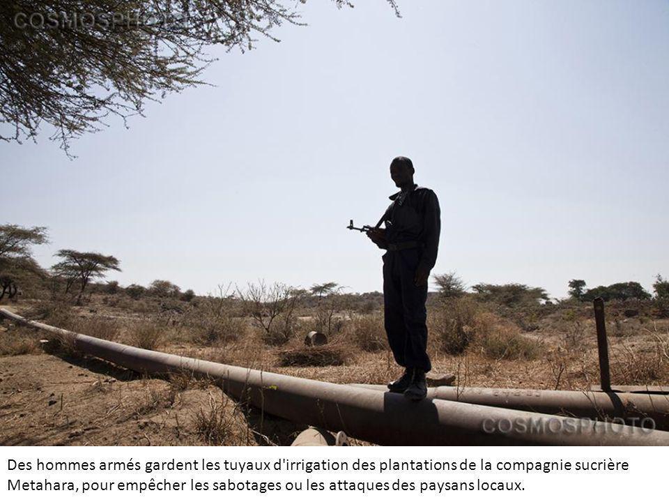 Des hommes armés gardent les tuyaux d irrigation des plantations de la compagnie sucrière Metahara, pour empêcher les sabotages ou les attaques des paysans locaux.
