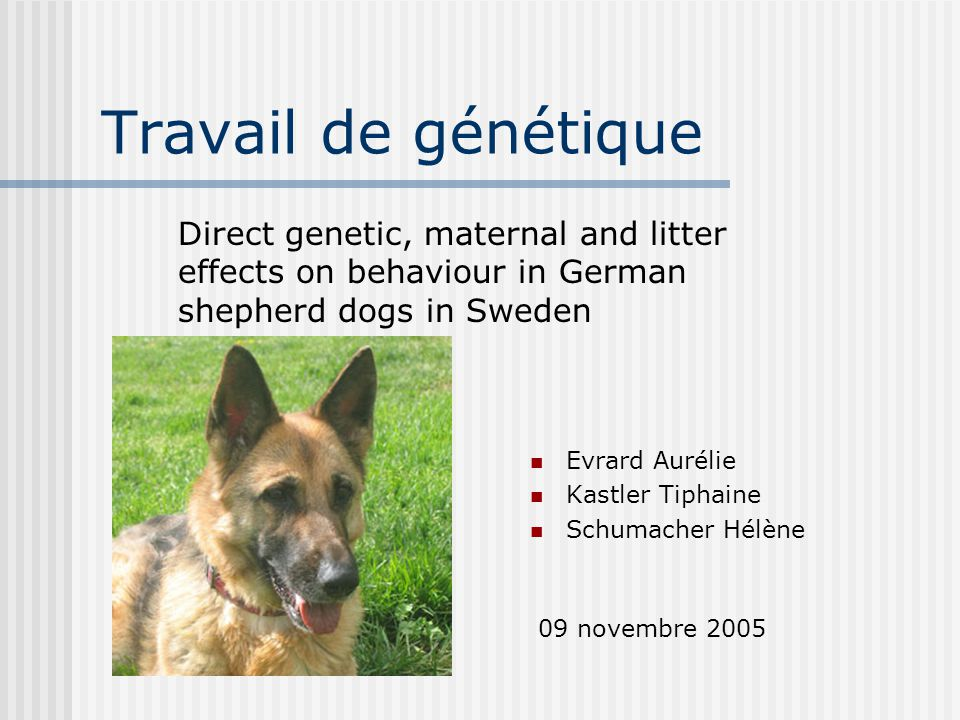 Travail de génétique Direct genetic, maternal and litter effects on behaviour in German shepherd dogs in Sweden.