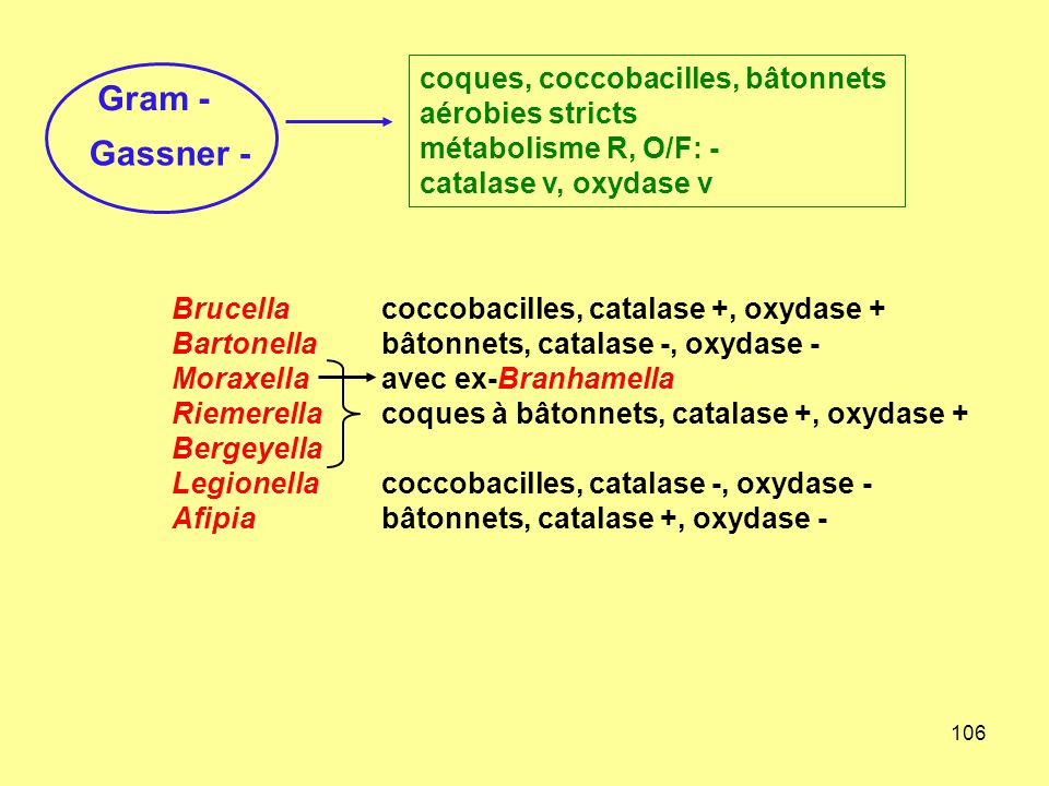 Gram - Gassner - coques, coccobacilles, bâtonnets aérobies stricts