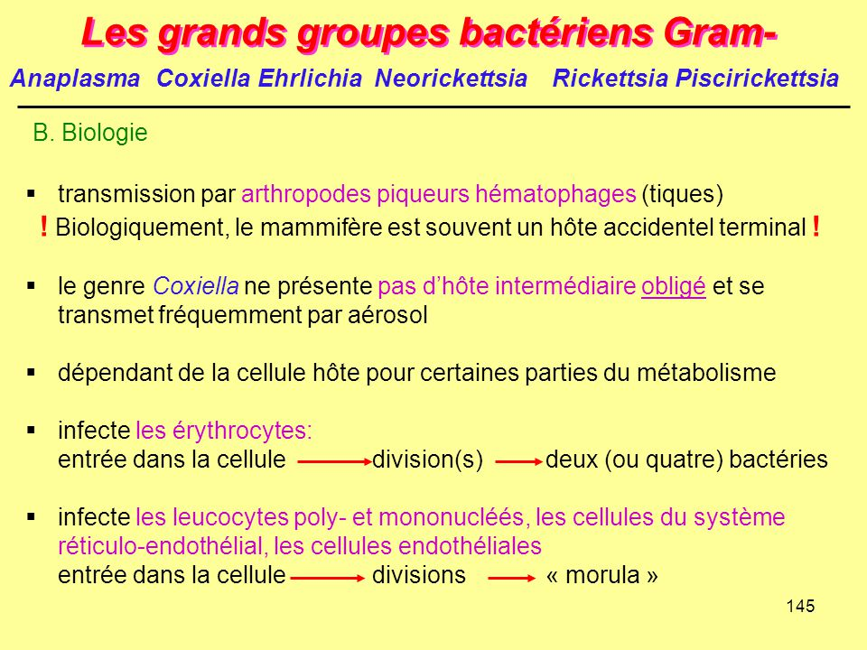 Les grands groupes bactériens Gram-