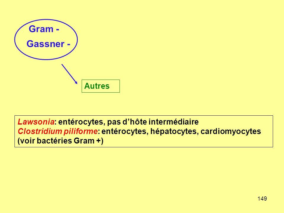 Gram - Gassner - Autres. Lawsonia: entérocytes, pas d'hôte intermédiaire.