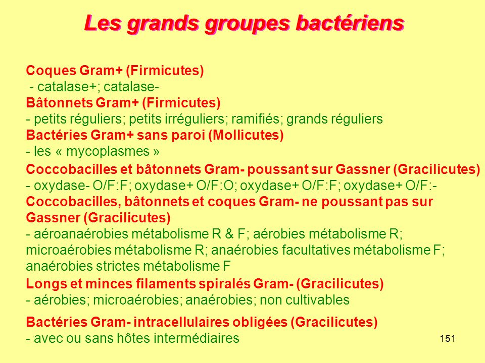 Les grands groupes bactériens