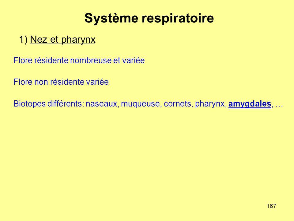 Système respiratoire 1) Nez et pharynx