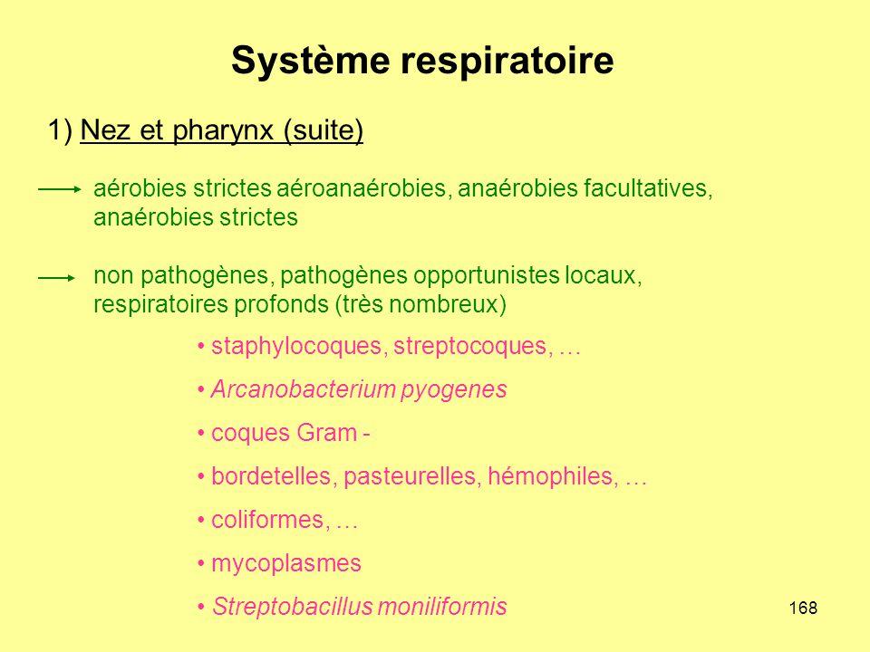 1) Nez et pharynx (suite)