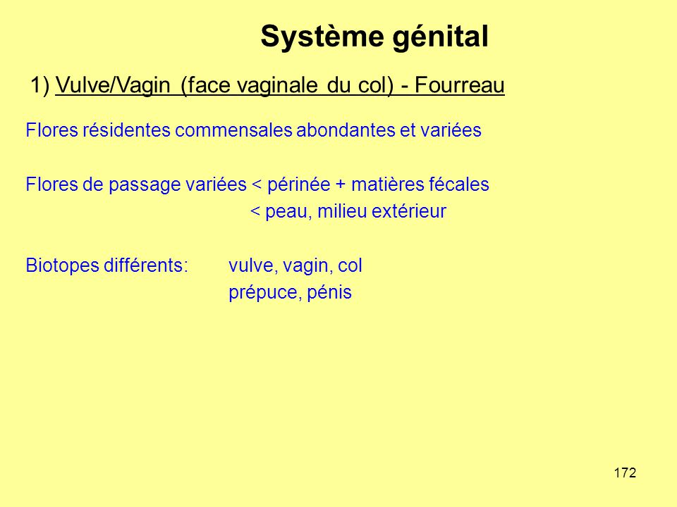 1) Vulve/Vagin (face vaginale du col) - Fourreau