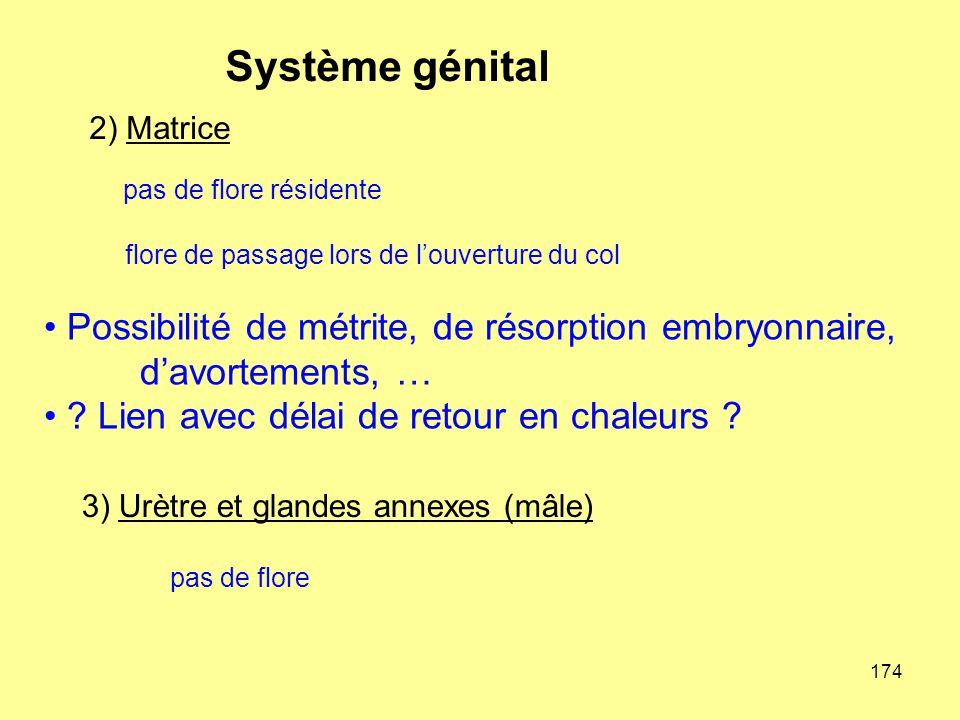 3) Urètre et glandes annexes (mâle)