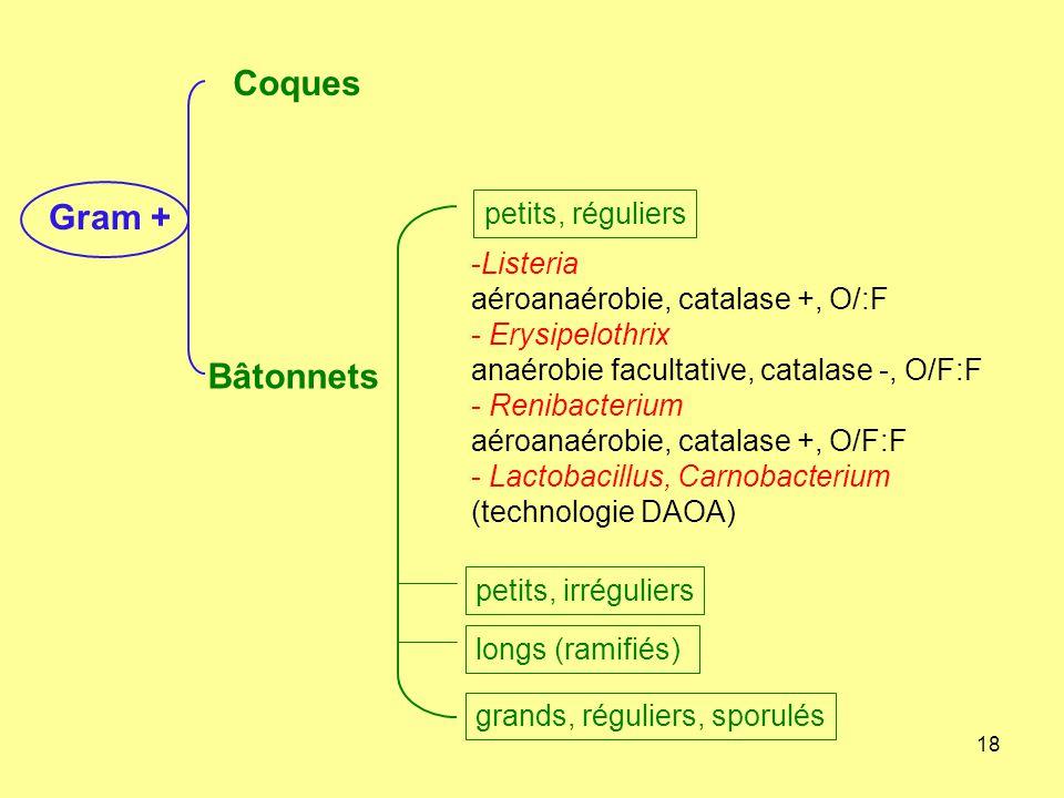 Coques Gram + Bâtonnets petits, réguliers Listeria