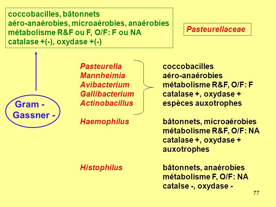 coccobacilles, bâtonnets aéro-anaérobies, microaérobies, anaérobies métabolisme R&F ou F, O/F: F ou NA catalase +(-), oxydase +(-)