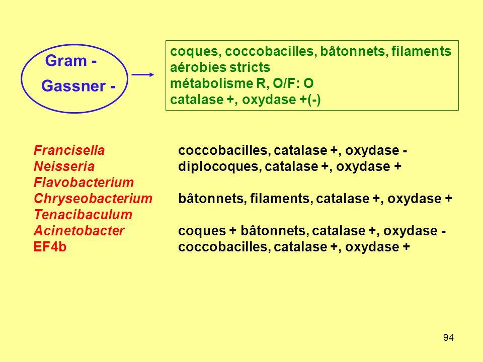 coques, coccobacilles, bâtonnets, filaments aérobies stricts
