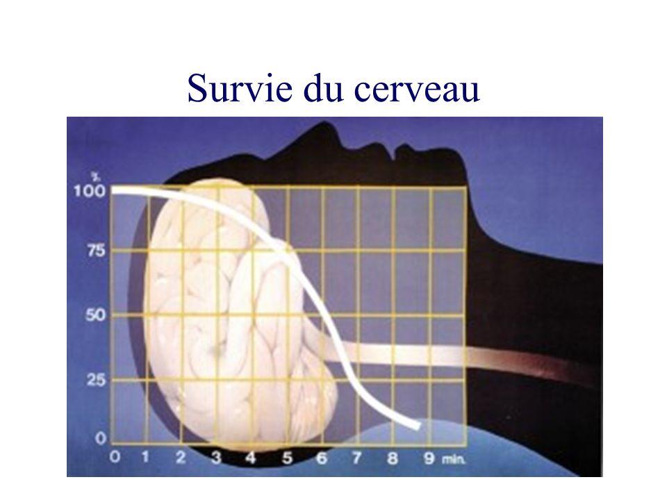 Survie du cerveau