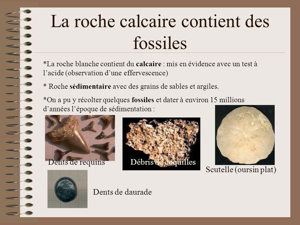 La roche calcaire contient des fossiles