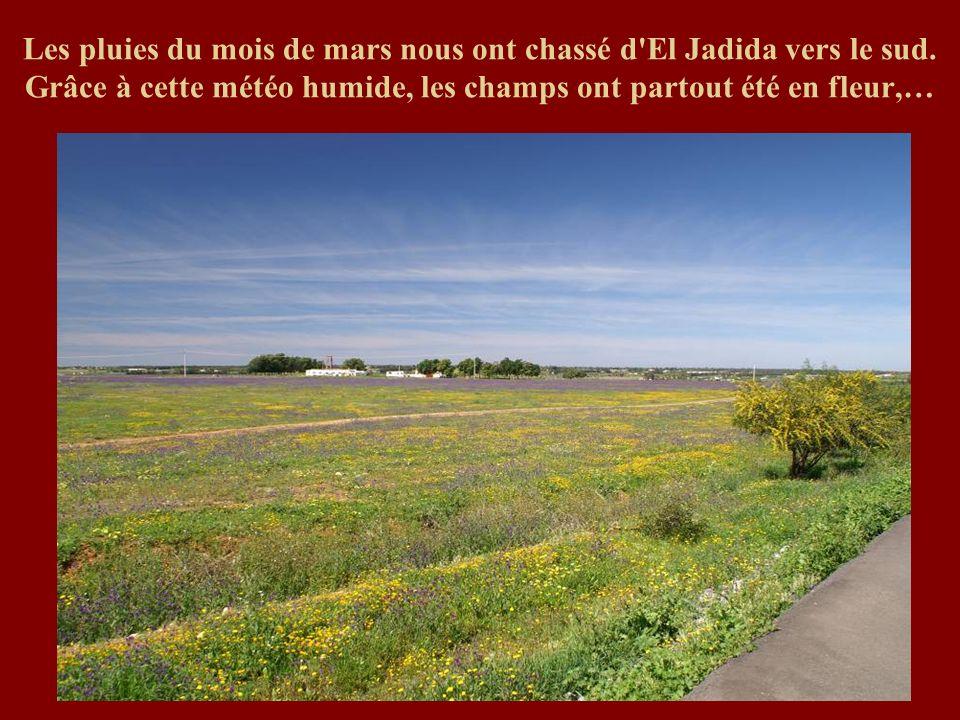 Les pluies du mois de mars nous ont chassé d El Jadida vers le sud