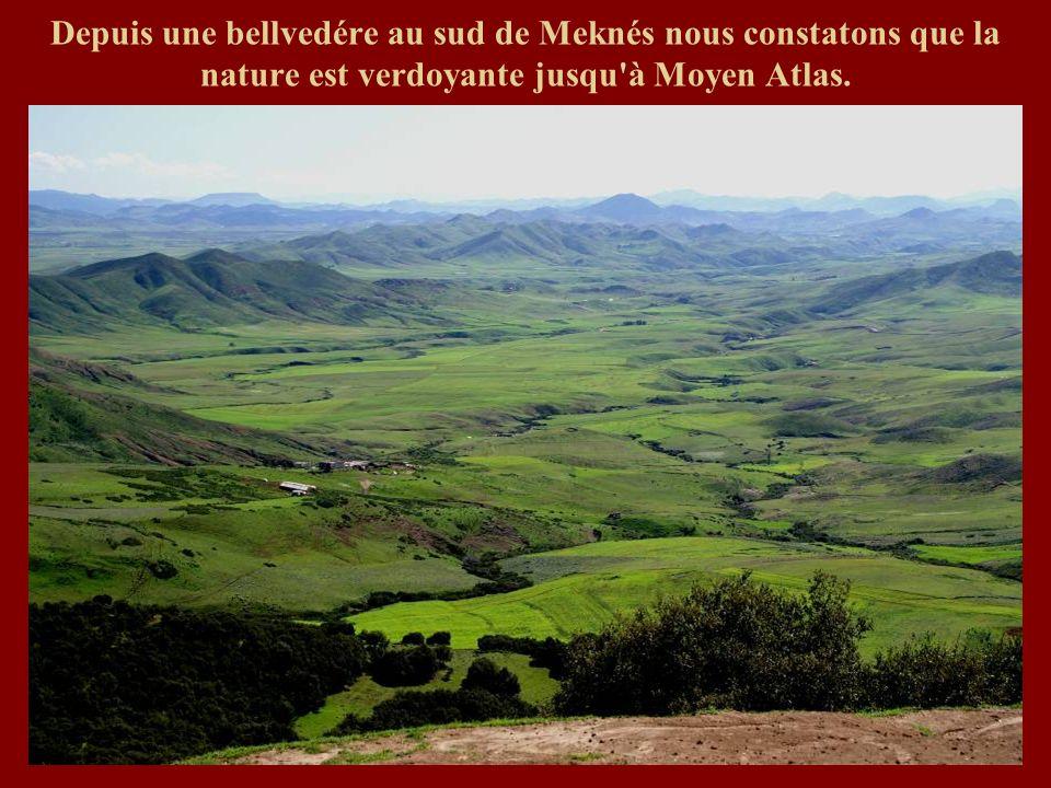 Depuis une bellvedére au sud de Meknés nous constatons que la nature est verdoyante jusqu à Moyen Atlas.