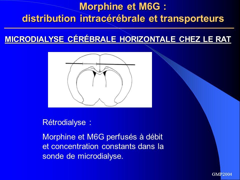 Morphine et M6G : distribution intracérébrale et transporteurs