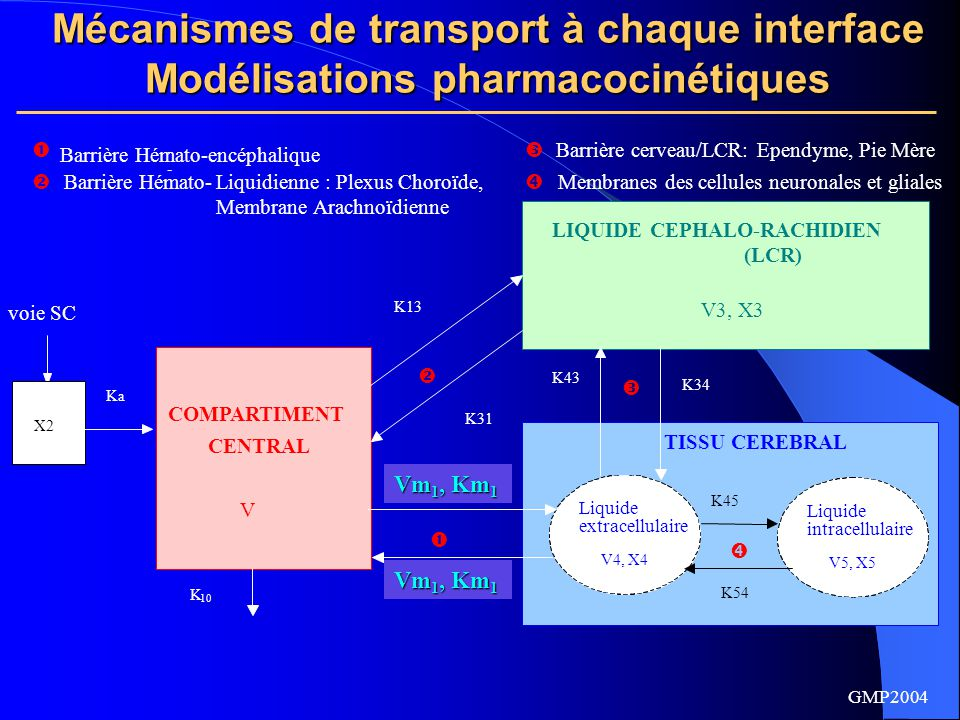 Mécanismes de transport à chaque interface