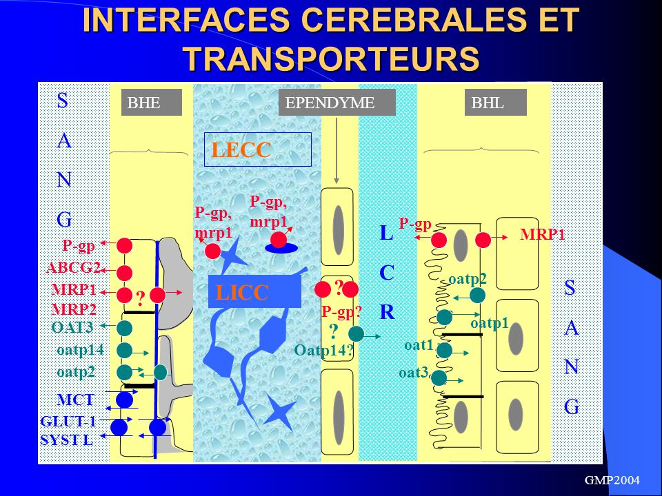 INTERFACES CEREBRALES ET TRANSPORTEURS