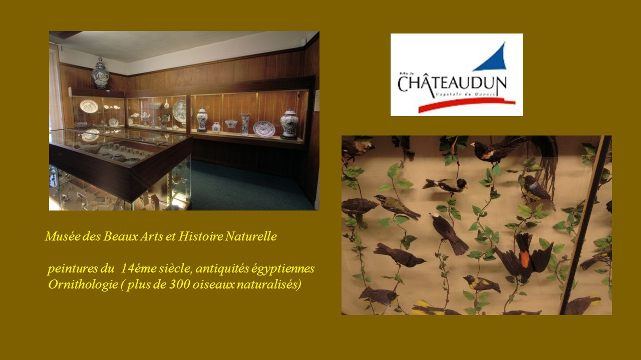 Musée des Beaux Arts et Histoire Naturelle