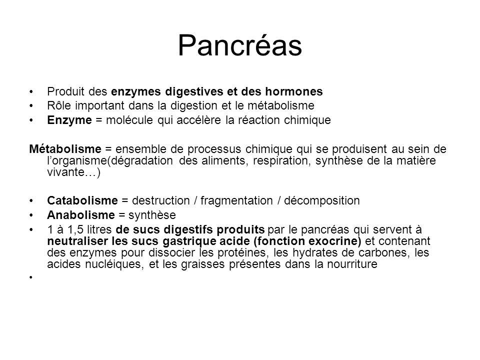 Pancréas Produit des enzymes digestives et des hormones