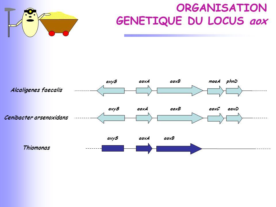 ORGANISATION GENETIQUE DU LOCUS aox