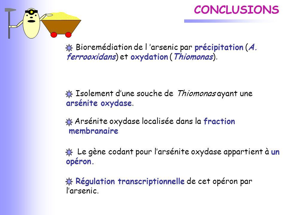 CONCLUSIONS Bioremédiation de l 'arsenic par précipitation (A. ferrooxidans) et oxydation (Thiomonas).