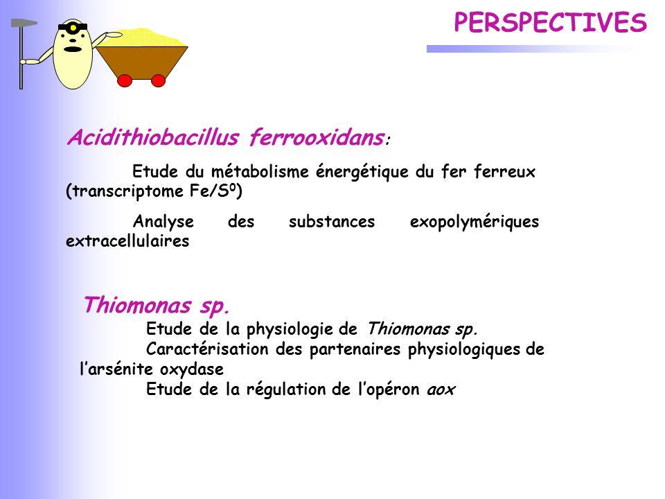 PERSPECTIVES Acidithiobacillus ferrooxidans: Thiomonas sp.