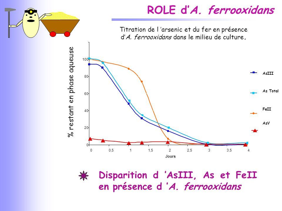 ROLE d'A. ferrooxidans Titration de l 'arsenic et du fer en présence. d'A. ferrooxidans dans le milieu de culture.